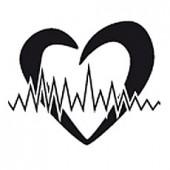 Сердце и Кровеносная система
