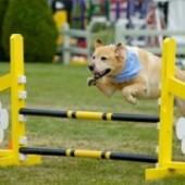 Тренировки и Соревнования