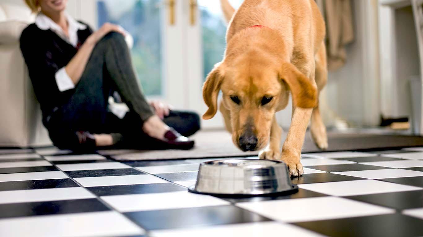большому картинки собака ест с руки жизнь смерть