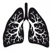 Лёгкие и дыхательная система