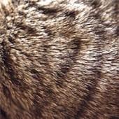 Шерсть и кожа, борьба с аллергией
