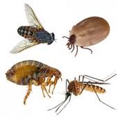 Препараты против насекомых